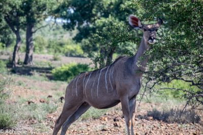 Kruger National Park, South Africa - Self drive from Phalaborwa to Satara