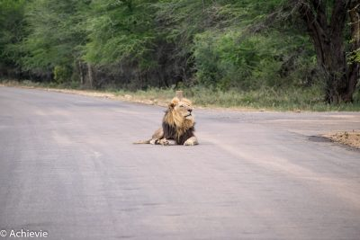 Kruger National Park, South Africa - Self drive from Satara to Berg-en-Dal