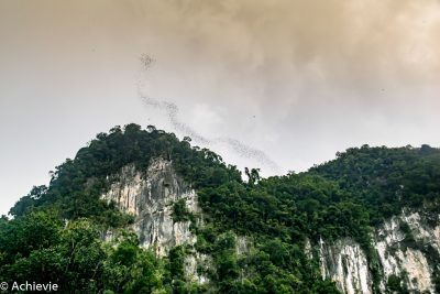 Borneo, Malaysia - Mulu - Gunung Mulu National Park - Bat exodus from Deer Cave