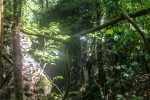 Borneo, Malaysia - Mulu - Gunung Mulu National Park - Hiking trails