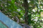 Borneo, Malaysia - Mulu - Gunung Mulu National Park - Snake encounter